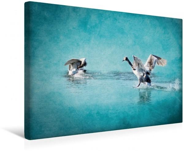 Wandbild Ich krieg dich! Die sonderbare Welt der lustigen Vögel Die sonderbare Welt der lustigen Vögel