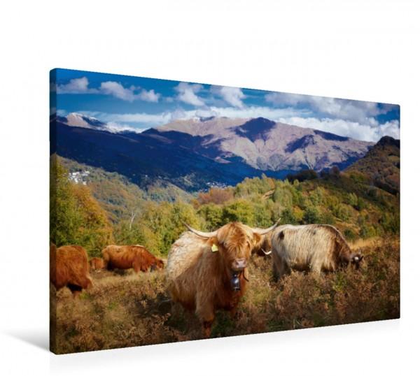 Wandbild Tessin - Schottische Hochlandrinder halten den Bewuchs kurz