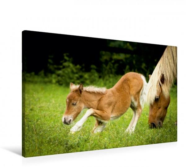 Wandbild Ponys, die starken Persönlichkeiten