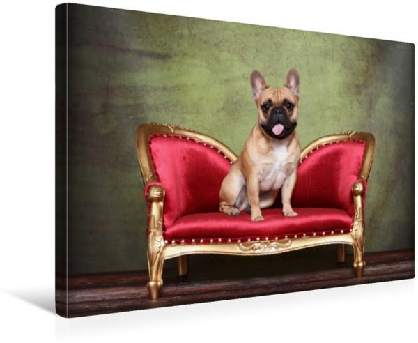 Wandbild Französische Bulldogge French Bulldog