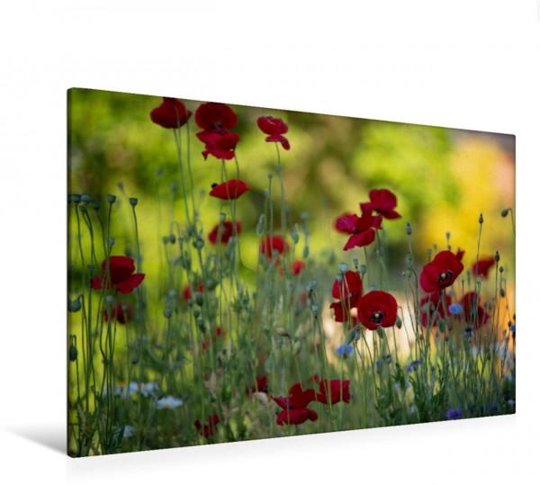Wandbild Wildblumen mit Klatschmohn im Garten Dunkel roter Klatschmohn mit Kornblumen im Garten Dunkel roter Klatschmohn mit Kornblumen im Garten