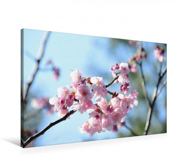 Wandbild Die Kirschblüte in Japan