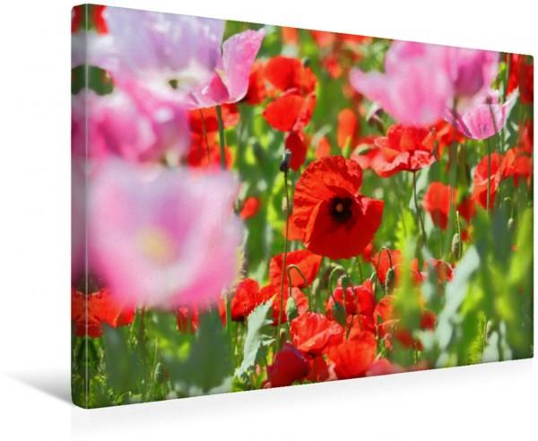 Wandbild Ein Traum in Rot Mohn zarte Blüten starke Farben Mohn zarte Blüten starke Farben