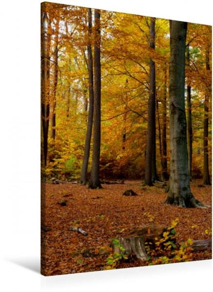 Wandbild Herbstlicher Buchenwald im Tiergarten von Siegen-Weidenau Teil des Parks geschaffen von Fürst Johann-Moritz Teil des Parks geschaffen von Fürst Johann-Moritz