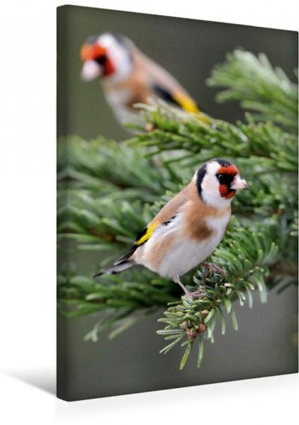 Wandbild Stieglitz Vögel im heimischen Garten Vögel im heimischen Garten