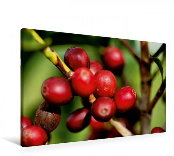 Wandbild Reifer Arabica-Kaffee Kaffee aus Brasilien kurz vor der Ernte Kaffee aus Brasilien kurz vor der Ernte