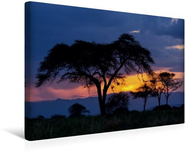 Wandbild Akazie im Sonnenuntergang - Tarangire - Tansania Schirmakazie - Baum - im Sonnenuntergang aus Tansania Schirmakazie - Baum - im Sonnenuntergang aus Tansania