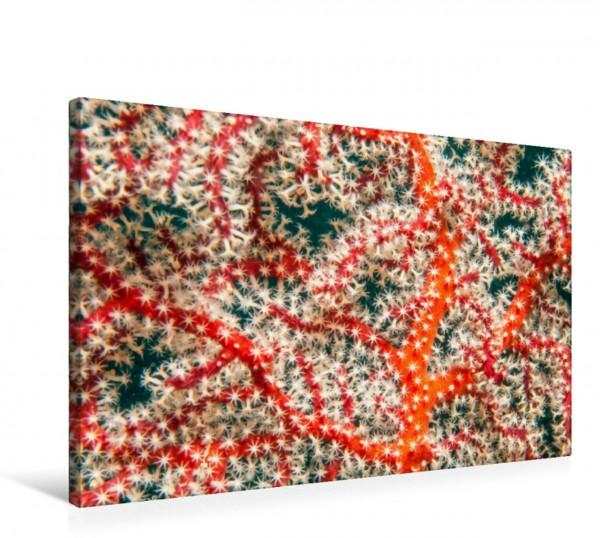 Wandbild Polypen einer Gorgonie, eine Korallenart