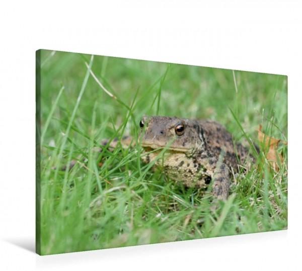Wandbild Erdkröte