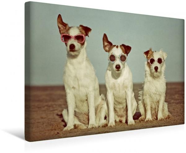 Wandbild Drei Terrierhippies ...am Strand ...am Strand