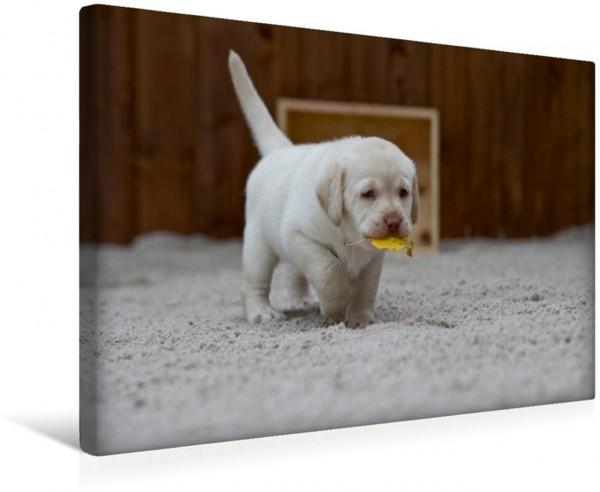 Wandbild Ich bringe Dir den Herbst Labrador Welpen Labrador Welpen