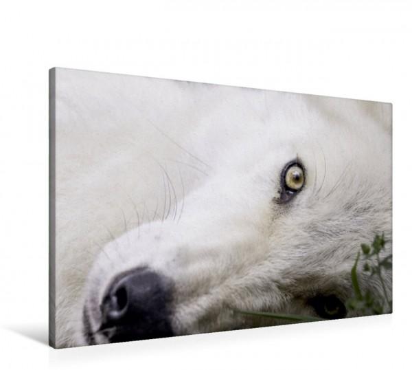 Wandbild Weißer Wolf von Kanada
