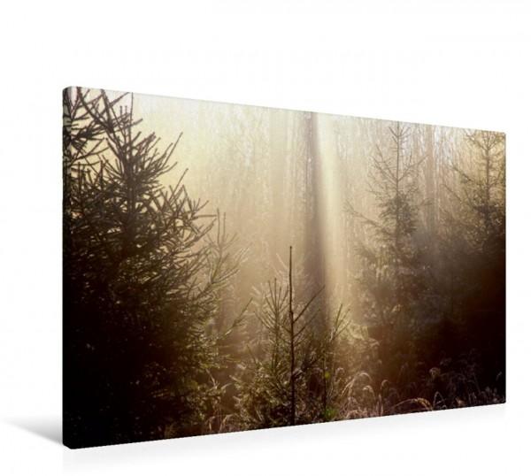 Wandbild Sonnenstrahlen im Wald Sonnenstrahlen im Wald Sonnenstrahlen im Wald
