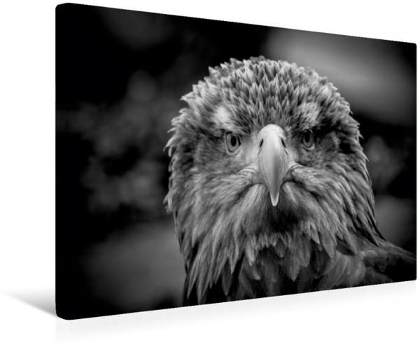 Wandbild Seeadler Tierische Augenblicke Tierische Augenblicke