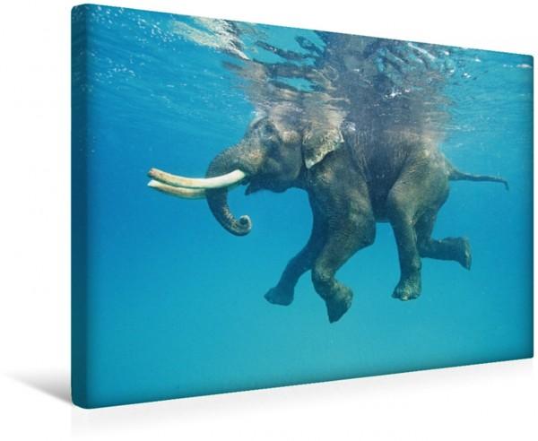 Wandbild Auch Dickhäuter brauchen eine Erfrischung - ein schwimmender Elefant Schwimmender Elefant Andamanen und Nikobaren Inseln Indien Schwimmender Elefant Andamanen und Nikobaren Inseln Indien