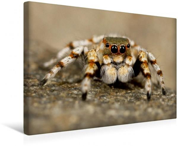 Wandbild Faszination Spinnen