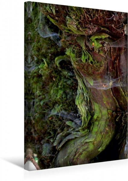 Wandbild Magische Waldmomente