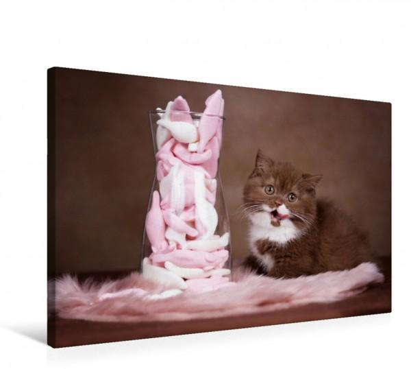 Wandbild Katzen - Der Kalender für jeden Katzenliebhaber