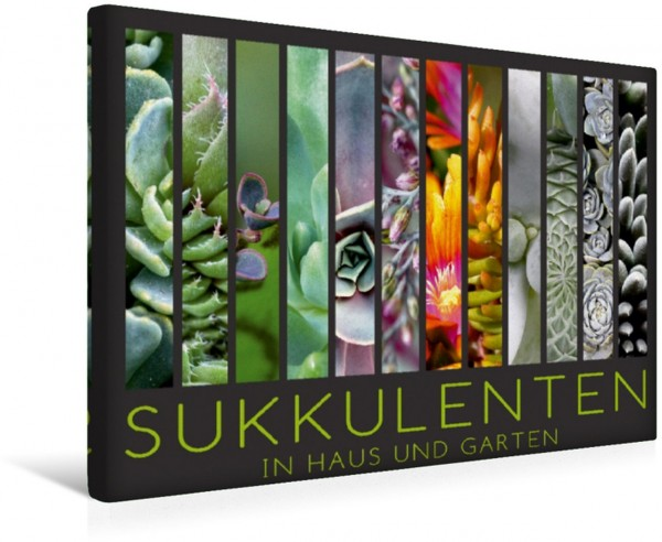 Wandbild Sukkulenten in Haus und Garten Sukkulenten in Haus und Garten Sukkulenten in Haus und Garten