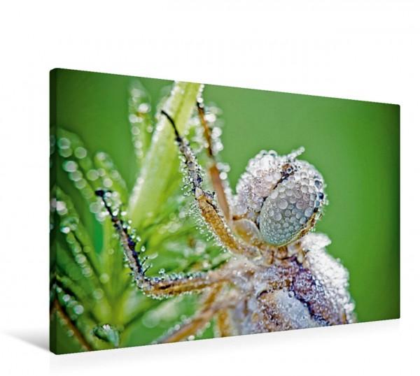 Wandbild Tautropfen bedecken eine rastende Libelle Libelle Libelle