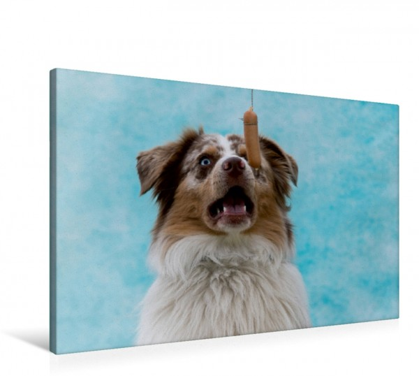 Wandbild Überraschter Hund Hilfe ein fliegendes Würstchen Hilfe ein fliegendes Würstchen