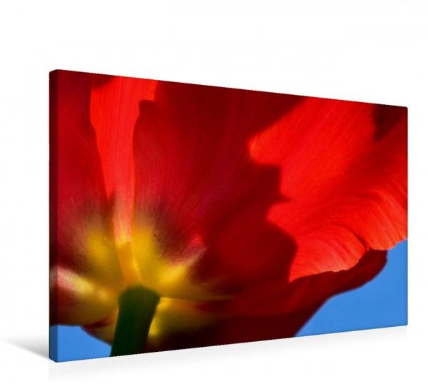 Wandbild Zauberhafte Tulpen
