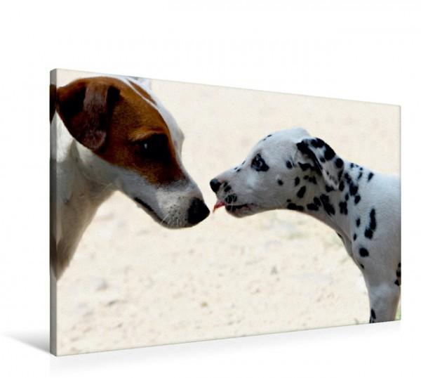 Wandbild Die Liebe zwischen Dalmatiner und Cocker Spaniel Der Kuss Der Kuss