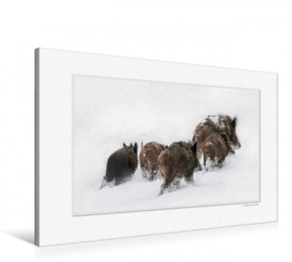 Wandbild Emotionale Momente: Das Wildschwein. CH-Version