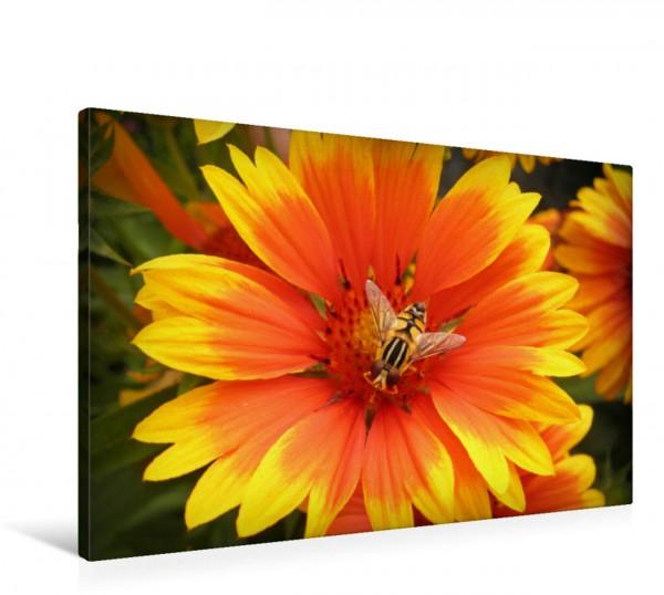 Wandbild Ringelblumen haben Gäste Stehfliege auf einer Ringelblumen-Art Stehfliege auf einer Ringelblumen-Art