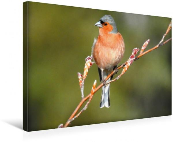 Wandbild Vogelkalender