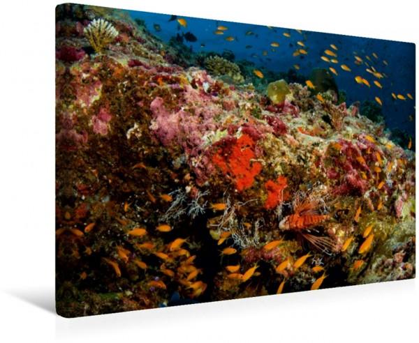 Wandbild Malediven - Die bunte Unterwasserwelt Strahlen Rotfeuerfisch Strahlen Rotfeuerfisch