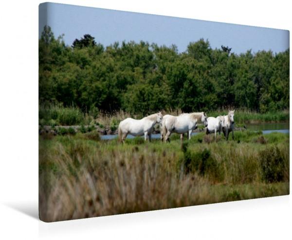 Wandbild Camargue-Pferde am Étang de Ginès