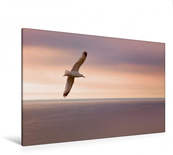 Wandbild Freiheit Frei wie ein Vogel Frei wie ein Vogel