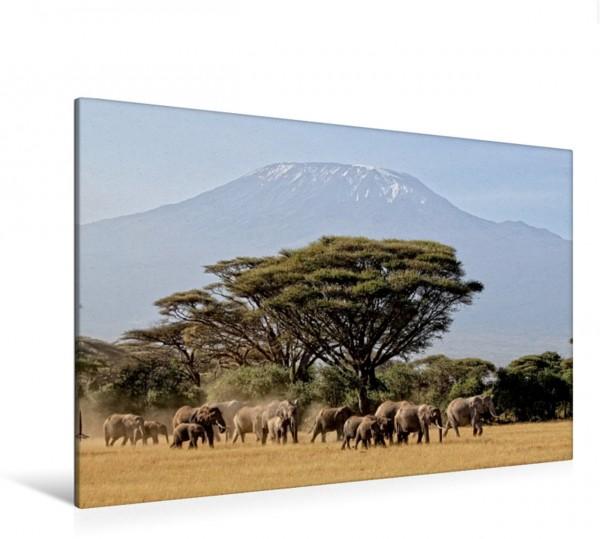 Wandbild Majestätische Tiere vor dem Berg der Berge: Elefanten vor dem Kilimandjaro ! Kenia Elefanten. Wildlife in Kenia Elefanten. Wildlife in Kenia