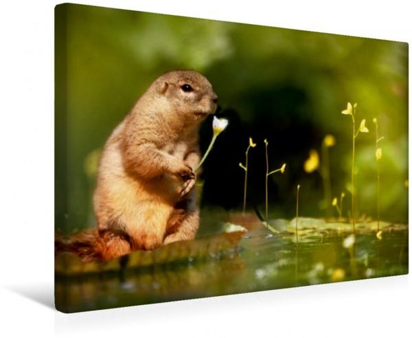 Wandbild Ein Eichhörnchen beim Blumenpflücken