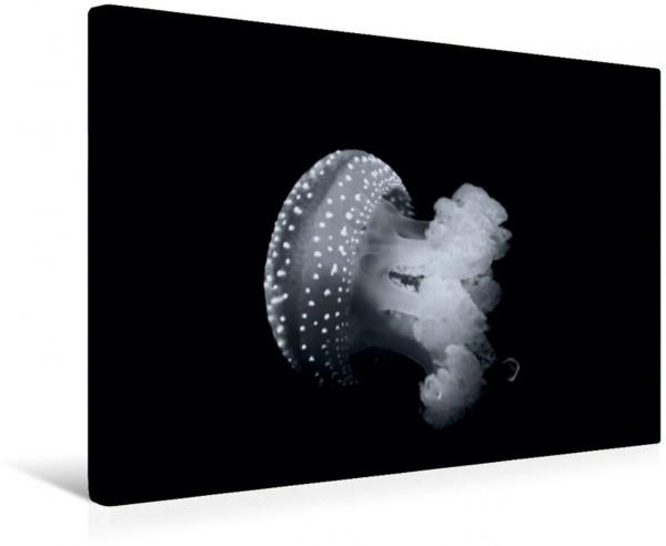 Wandbild Meerestiere Bilder in Schwarz Weiss