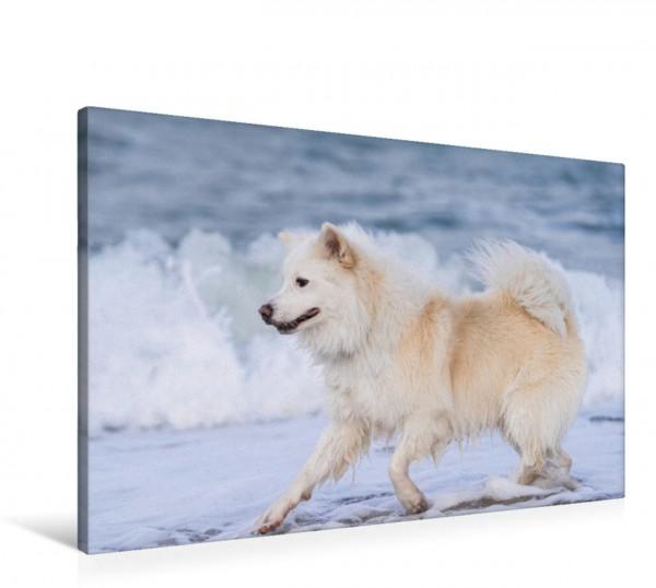 Wandbild Am Strand Mein Islandhund am Strand von Fehmarn Mein Islandhund am Strand von Fehmarn