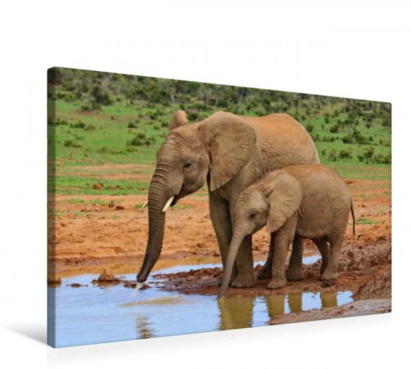 Wandbild Elefanten trinken am Wasserloch