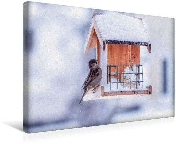 Wandbild Am Vogelhaus Sparrow in winter Sparrow in winter