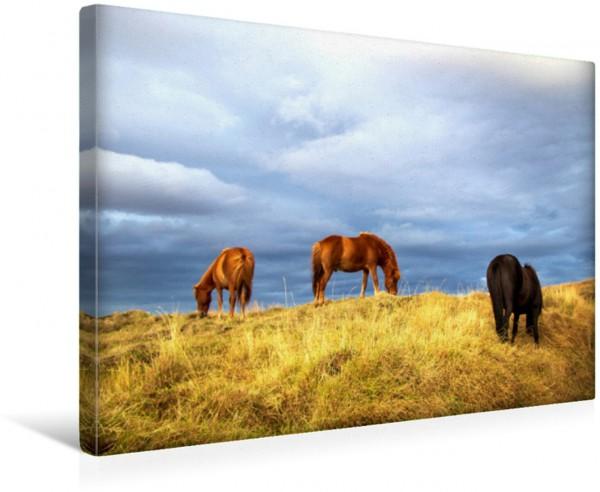 Wandbild Pferde auf Island