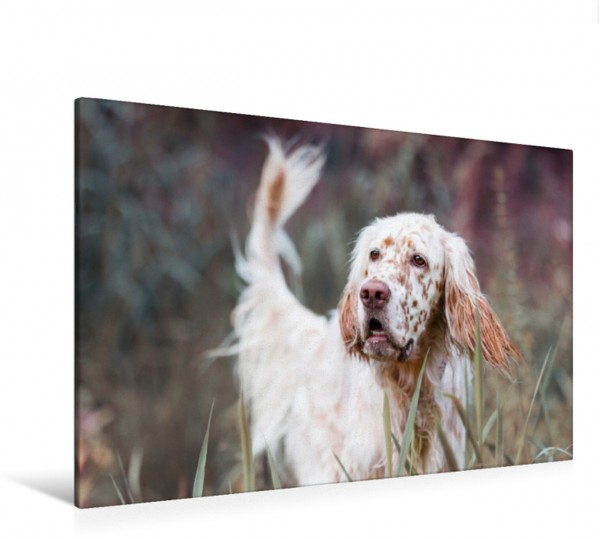 Wandbild Portrait einer gutmütigen Hunderasse: English Setter Impressionen edler Hunde Impressionen edler Hunde