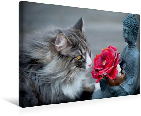 Wandbild Nur für Dich! Die norwegische Waldkatze der Buddha und die Rose Die norwegische Waldkatze der Buddha und die Rose