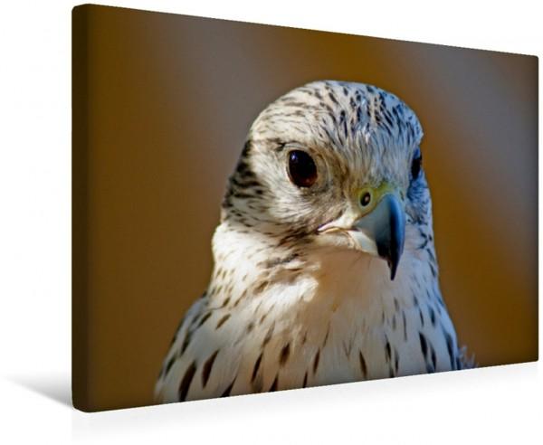 Wandbild Greifvögel und Eulen im Portrait
