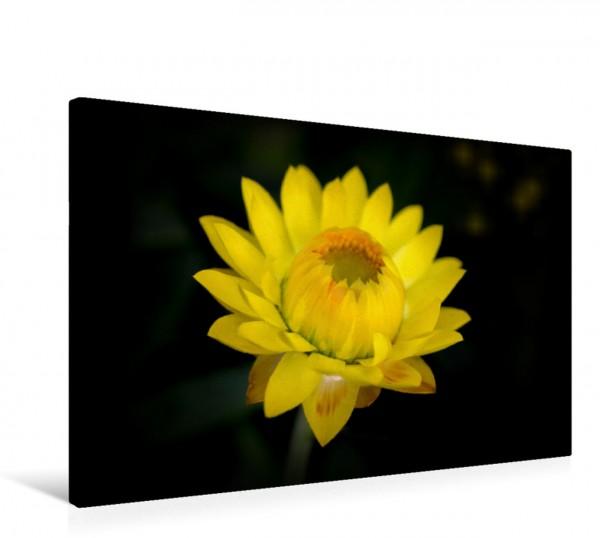 Wandbild Blütenfarbe GELB