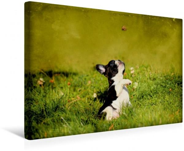 Wandbild Spielender Bulldoggenwelpe Französische Bulldogge Französische Bulldogge