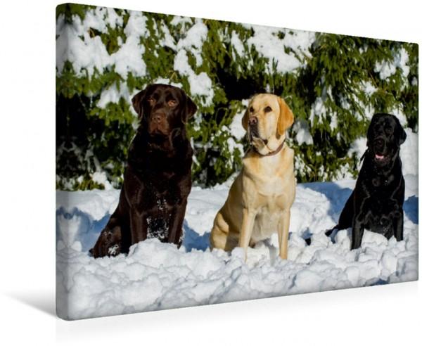 Wandbild Labrador Retriever - Freunde für´s Leben