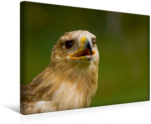 Wandbild Raubadler Savannenadler