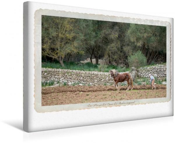 Wandbild Emotionale Momente - Lust auf Landleben auf Mallorca.