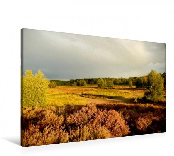 Wandbild Wahner Heide - Aussichten und Begegnungen
