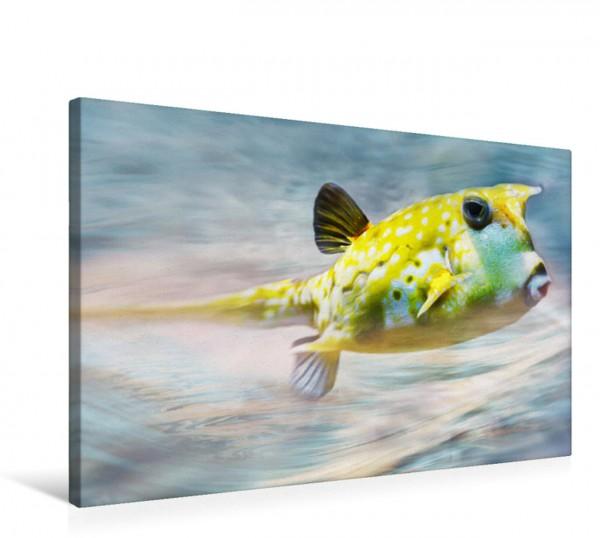 Wandbild Kugelfisch Lustiger Geselle Lustiger Geselle